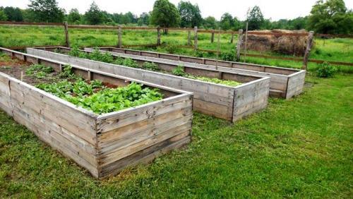 Правильные грядки на огороде. Общие правила и примеры того, как сделать грядки из досок своими руками