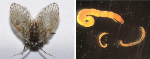 Мелкие насекомые в ванной. Как избавиться от мелких мушек