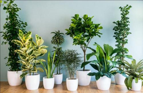 Растения для дома большие. Декоративные растения для дома