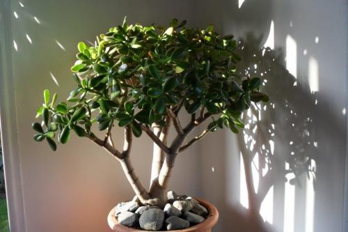 Растения для привлечения денег. 5 растений, привлекающих деньги и богатство!