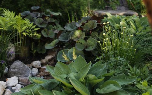 Растения любящие тень и влагу. Растения для влажной тени
