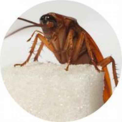 Маленькие прозрачные насекомые в квартире. Все виды квартирных насекомых
