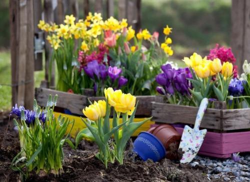 Цветник с многолетними травянистыми схема. Клумбы из многолетников: правила и особенности выращивания для новичков (85 фото)